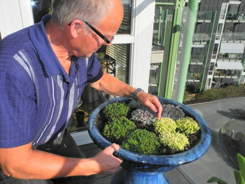 Jeg synes det grønne bladverket på plantene er viktig å tenke på når man skal gjøre det grønt og fint rundt seg,  sier Amfiets egen gartner, Lars Nypan. Her kikker han litt nøye på en bukett sedum-planter, enn så lenge uten blomster...